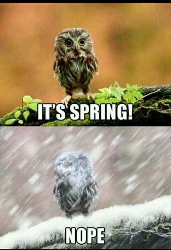 funny-spring-photos (28)