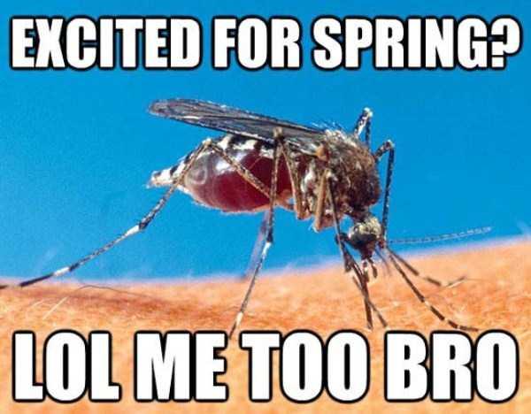 funny-spring-photos (9)