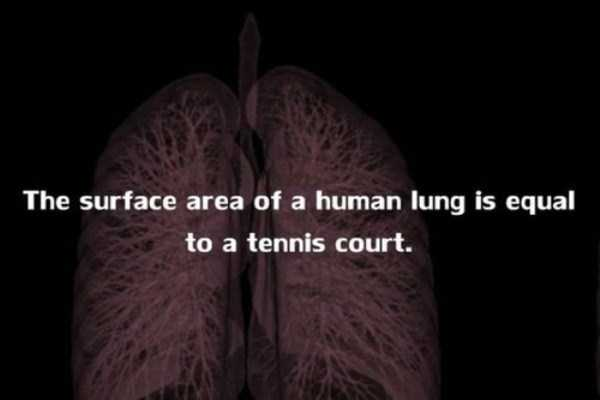 human-body-facts (10)