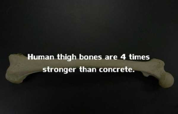 human-body-facts (13)