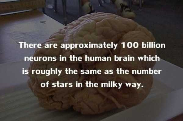 human-body-facts (18)