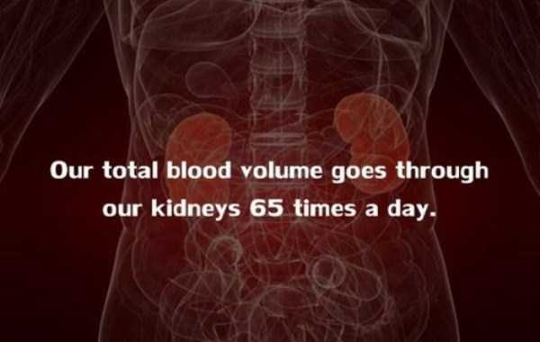 human-body-facts (5)