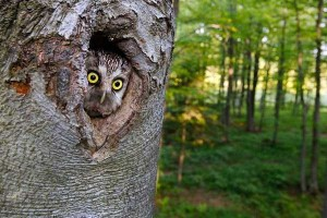 Crazy Things You Definitely Don't See Everyday (30 photos) 5