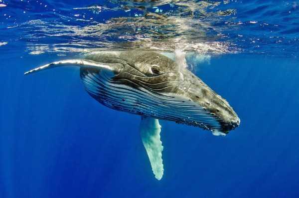 underwater-photographs (12)