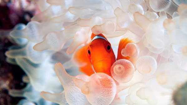 underwater-photographs (13)