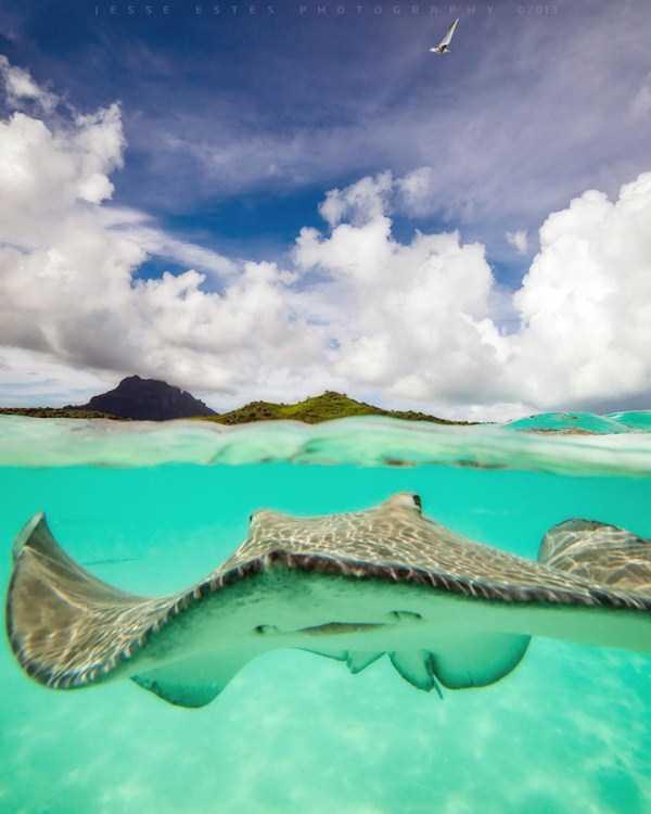 underwater-photographs (14)