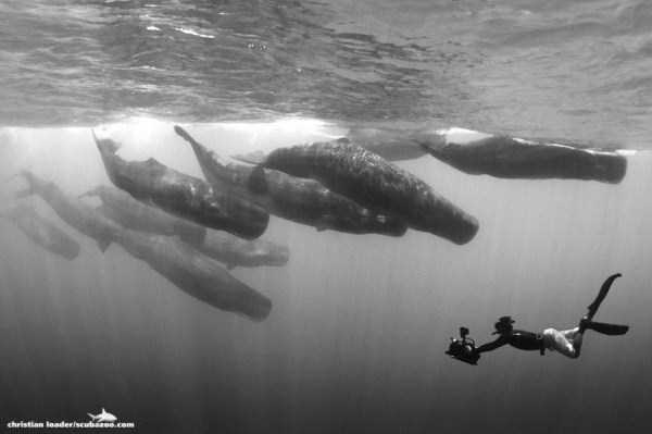 underwater-photographs (17)