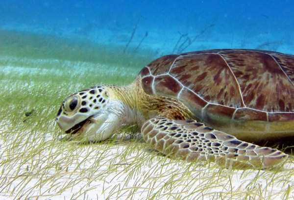 underwater-photographs (19)