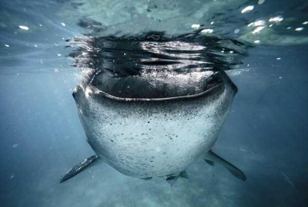 underwater-photographs (2)