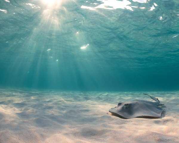underwater-photographs (21)