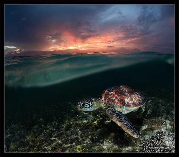 underwater-photographs (24)