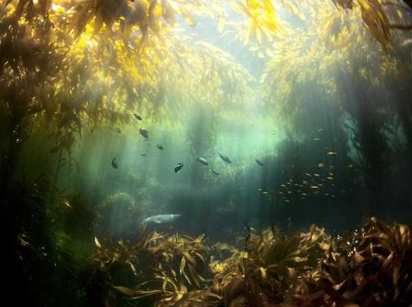 underwater-photographs (26)