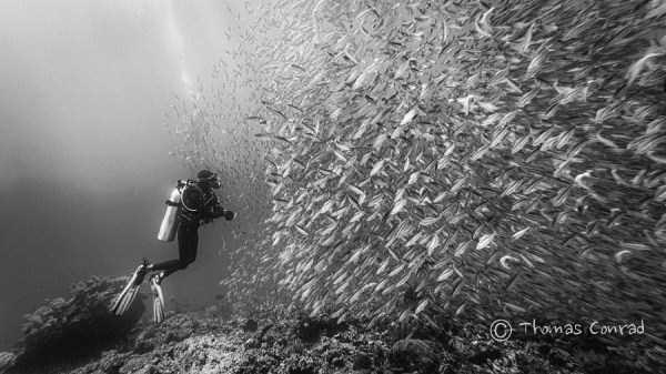 underwater-photographs (28)