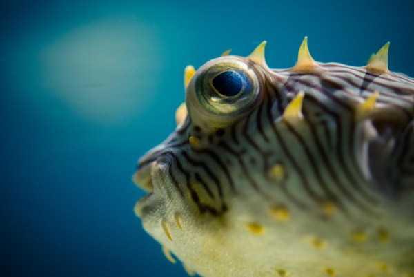 underwater-photographs (3)