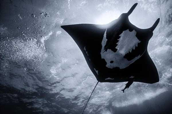 underwater-photographs (31)