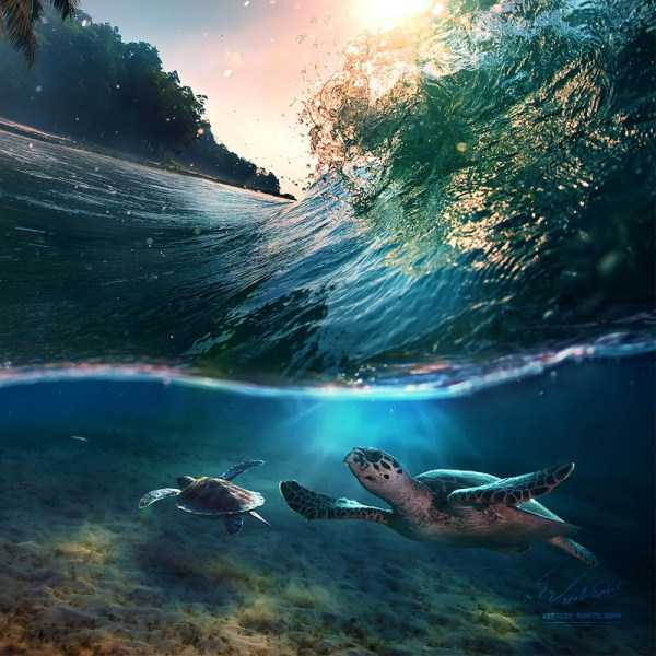 underwater-photographs (33)