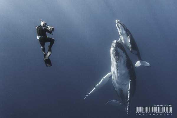 underwater-photographs (34)