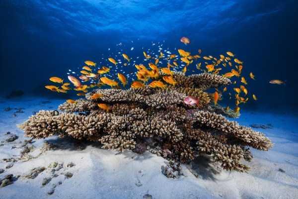 underwater-photographs (39)