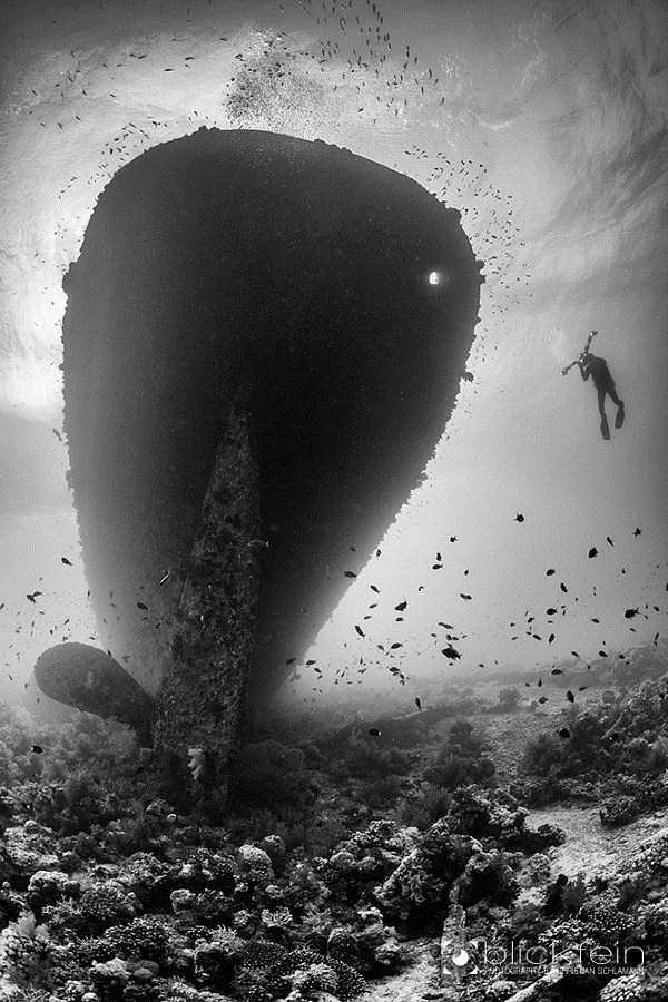 underwater-photographs (40)