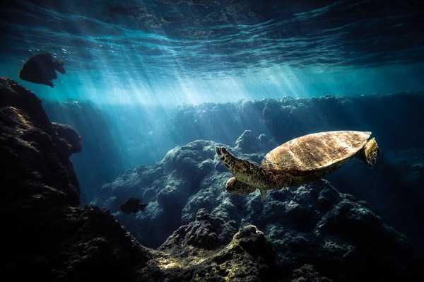 underwater-photographs (43)