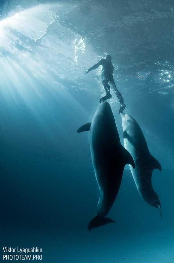 underwater-photographs (5)