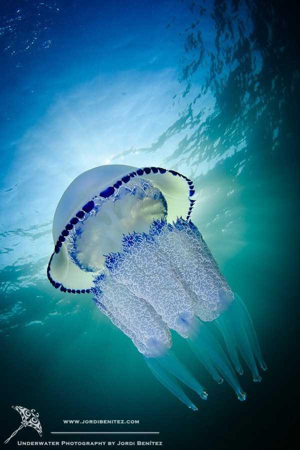 underwater-photographs (9)