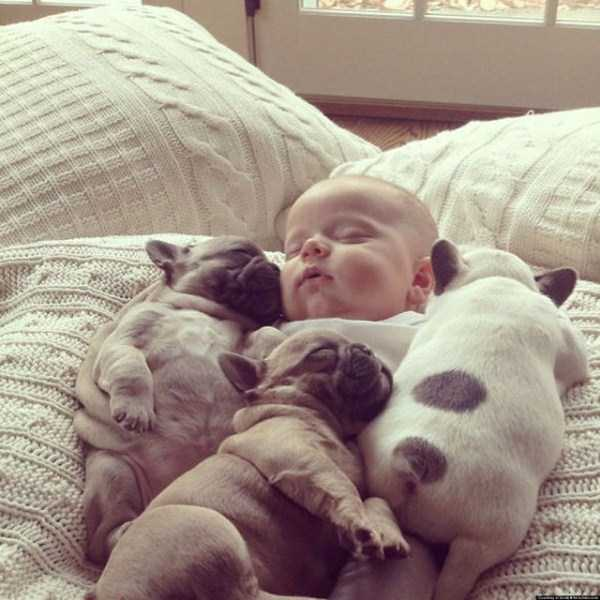 adorable-bulldog-puppiesjpg (25)