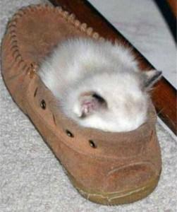 Adorable Sleepy Cats (38 photos) 1
