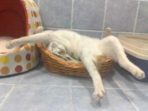 Adorable Sleepy Cats (38 photos) 11