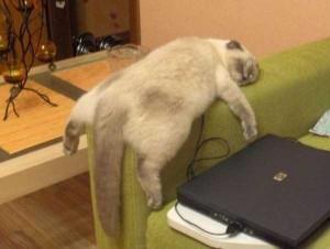 Adorable Sleepy Cats (38 photos) 13