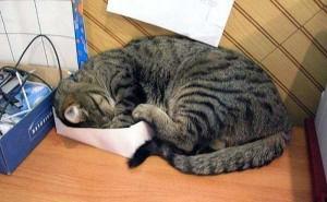 Adorable Sleepy Cats (38 photos) 15