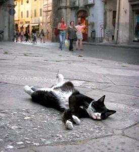 Adorable Sleepy Cats (38 photos) 16