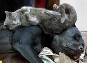 Adorable Sleepy Cats (38 photos) 19