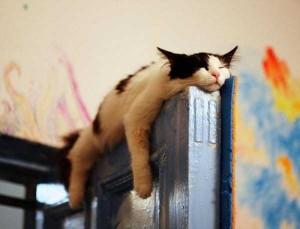 Adorable Sleepy Cats (38 photos) 2