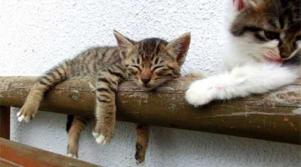 cats-sleeping-everywhere (28)