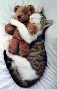 Adorable Sleepy Cats (38 photos) 29