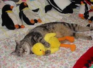 Adorable Sleepy Cats (38 photos) 31