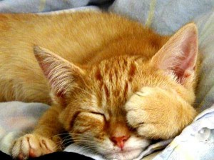 Adorable Sleepy Cats (38 photos) 33