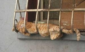 Adorable Sleepy Cats (38 photos) 35