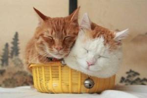 Adorable Sleepy Cats (38 photos) 36