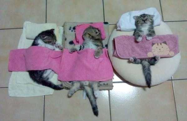cats-sleeping-everywhere (4)