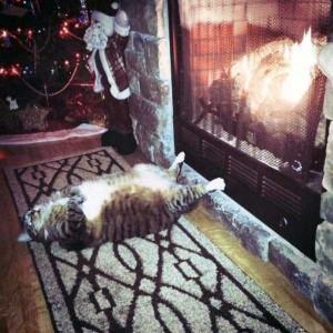 Adorable Sleepy Cats (38 photos) 6