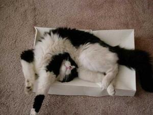 Adorable Sleepy Cats (38 photos) 9