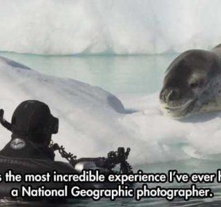 Incredibly Close Encounter With Vicious Leopard Seal (10 photos)