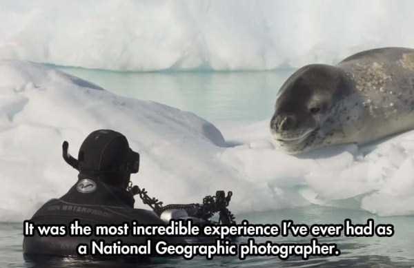 close-enounter-with-leopard-seal (10)