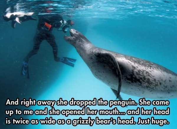 close-enounter-with-leopard-seal (2)