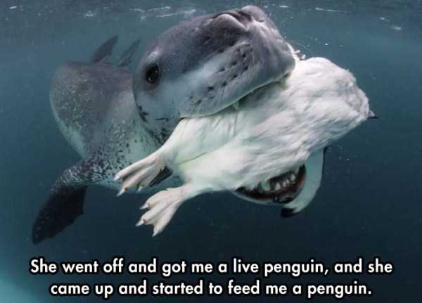 close-enounter-with-leopard-seal (4)