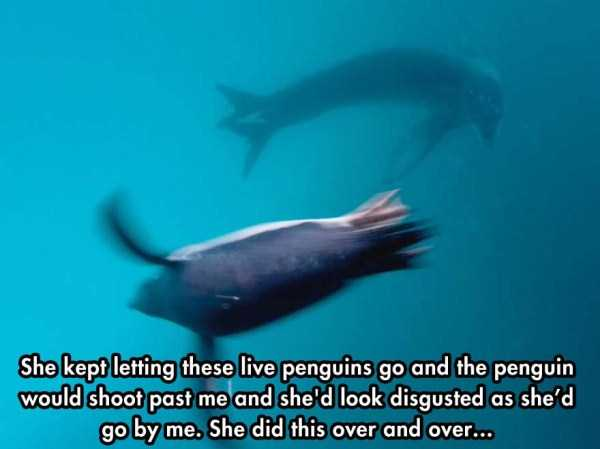 close-enounter-with-leopard-seal (5)