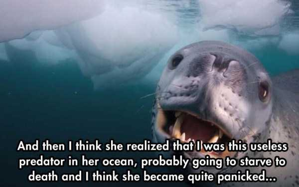 close-enounter-with-leopard-seal (6)