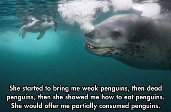 close-enounter-with-leopard-seal (7)